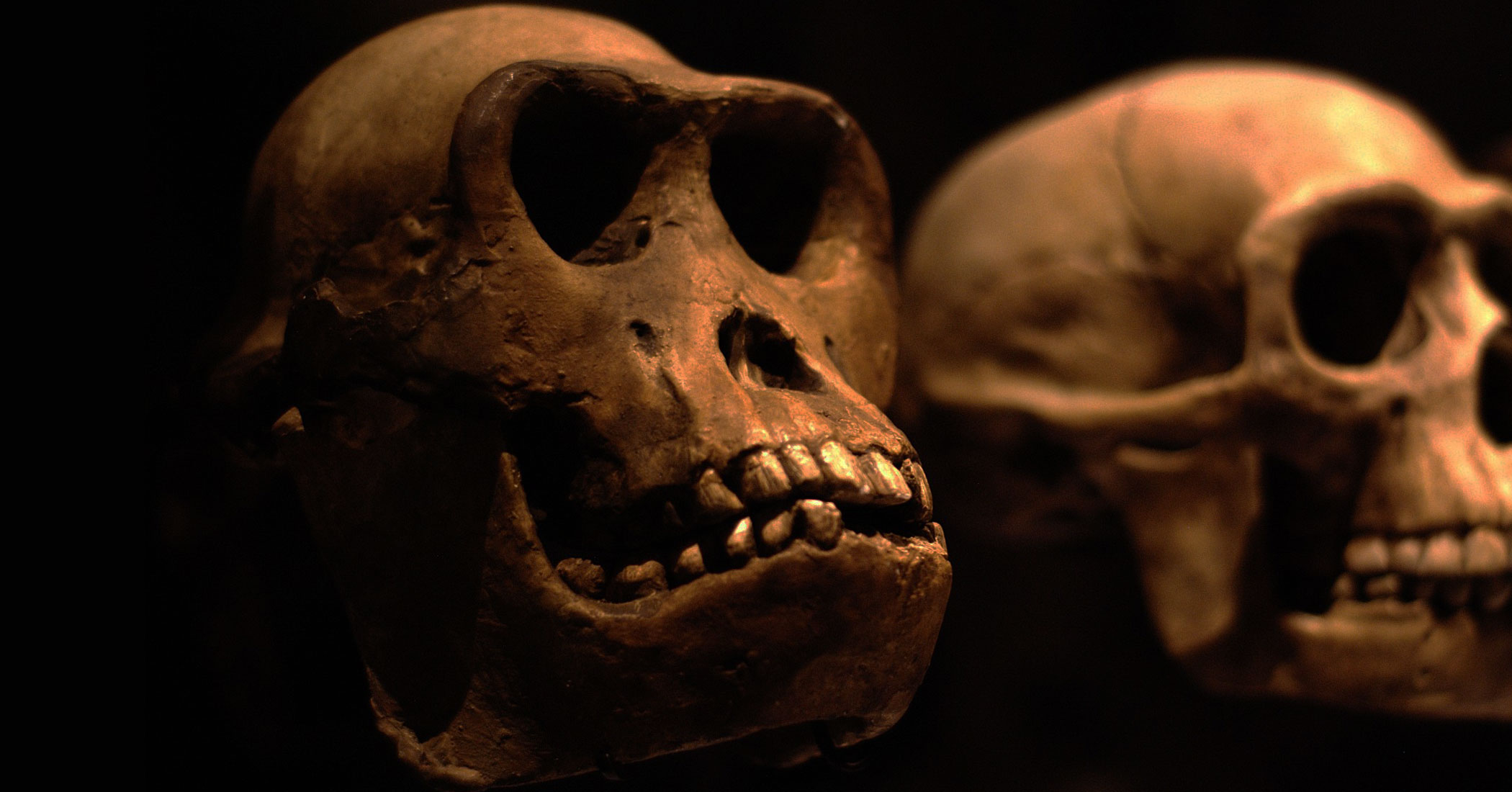 Human evolution | South African History Online