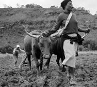 Land: dispossession, resistance and restitution | South